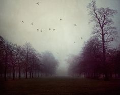 Trees in Fog, Landscape Photography, Autumn, Art Print, Dark, Mysterious, Purple, London - Shadows and Fog on Etsy, $30.00