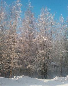 Talvi. Metsä. Laukaa