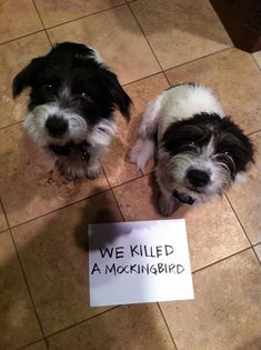 Animals are the best entertainment in the World, which make us laugh anytime, anywhere! Just look ridiculous animal picdump of the day 27 if you love funny animals. So ridiculous, funny and cute 28 funny animal pics! Funny Animal Pictures, Dog Pictures, Funny Animals, Cute Animals, Animal Pics, Cat Shaming, I Love Dogs, Cute Dogs, Adorable Puppies