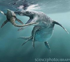 Cryptoclidus: Middle Jurassic (166 – 164Ma ): Sauropterygia (Plesiosauria): Discovered by Seeley, 1892: Artist unknownj