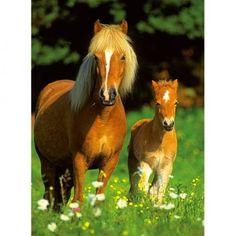 ...kocht  ik een paard met veulen