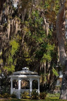 Home to a grand old Florida railroad hotel, the Lakeside Inn, and nearly a dozen B&Bs, Mount Dora, Lake Dora and the Dora Canal make a romantic getaway. Description from fineartamerica.com. I searched for this on bing.com/images