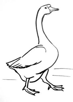 Three step by step drawing tutorials -How to draw walking Goose and how to draw flying Goose and a goose head separately. Goose Drawing, Fly Drawing, Duck Drawing, Farm Animal Coloring Pages, Colouring Pages, Bird Drawings, Easy Drawings, Drawing Birds, Gans Tattoo