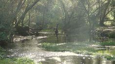 penasquitos_creek