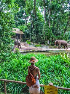 Dancing elephants