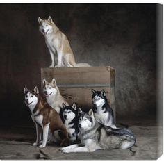 @Overstock - This hand crafted stretched canvas of Yann Arthus-Bertrand, 'Siberian Huskies (detail)' is a museum quality reproduction of the original work. Shipped to you finished and ready-to-hang, it is a welcome addition to any type of decor.http://www.overstock.com/Home-Garden/Yann-Arthus-Bertrand-Siberian-Huskies-detail-Stretched-Canvas-Art/7568562/product.html?CID=214117 $112.99