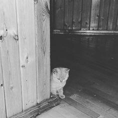https://www.instagram.com/p/BWvDueYFopP/Ну че вы спите то все 🐈 #кот #котырубцовска #рубцовск #нашрубцовск  #cat #cats