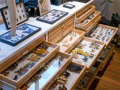 Entomology Department | The Evolution Store