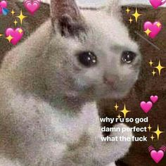 cat memes love heart * cat memes + cat memes laughing so hard + cat memes hilarious + cat memes face + cat memes funny + cat memes love heart + cat memes laughing so hard hilarious + cat memes clean Cute Cat Memes, Cute Love Memes, Funny Memes, Cute Couple Memes, Dankest Memes, 100 Memes, Stupid Memes, Memes Amor, Memes Lindos