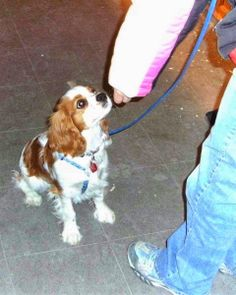 """Polite Dog & Human Greeting Part 1 """"Can I pet your dog?"""" This may be a question you hear & start to worry about how your dog will greet a stranger. Will your dog jump on your guest? Will your dog knock your guest over when saying hello?"""
