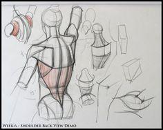 Karakalem Anatomi Model çizimleri Resim çizme teknikleri Karakalem insan çizim teknikleri anatomi çizimleri