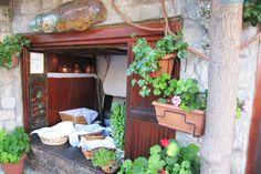 σαμοθρακη Organizer, Aquarium, Greece, Plants, Plant, Aquarius, Fish Tank, Planting, Planets