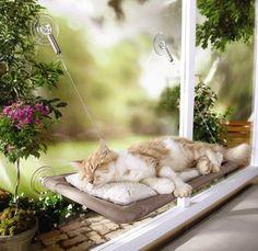sunny seat cat window ledge