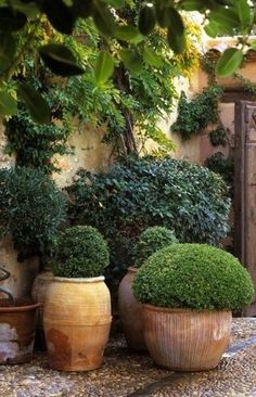 boxwood in terra cotta pots... could spray them with proper copper paint to get a patina