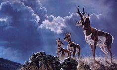 [EndLiss scans - Wildlife Art] Jocelyn Lillpot Russell - Protective Order (Pronghorns)