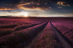 Valensole by JD Photographie. on Flickr.