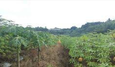 Tanah Seluas 4 Ha Pasir Putih Sawangan Depok
