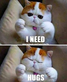 42 Best Snoopy The Cutest Cat Ever Images Cute Cats Funny Cats