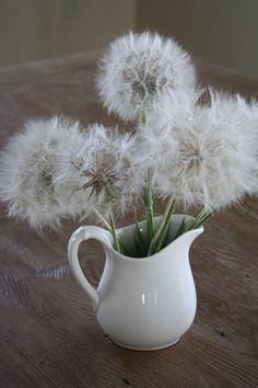 make a wish Little Flowers, Yellow Flowers, Wild Flowers, Dandelion Clock, Dandelion Wish, Make A Wish, Flower Art, Flower Power, Floral Arrangements