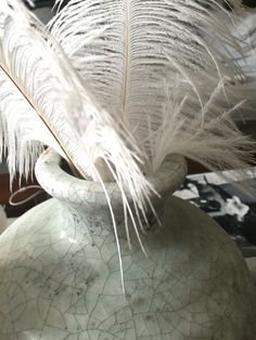 Ostrich feather@Home