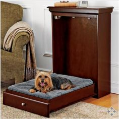 La cama plegable perruna ideal para conpartir un deparamento pequeño.  Folding bed doglike ideal for sharing a small department.