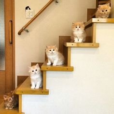 stair steps of kittens