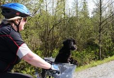 How to Gently Train Your Dog to Go On Bike Rides With You. Your dog's brain will be working overtime while you are training him to ride in a pet basket on your bike. Make sure you do not overdo it! Bike Trails, Hiking Trails, Working Overtime, Downtown Vancouver, Family Getaways, Cycling Workout, Tri Cities, Training Your Dog, Riding Helmets