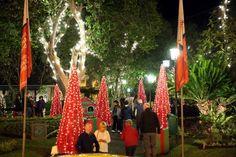 Weihnachtszeit auf Madeira: Schön warm, stimmungsvoll und fröhlich. Eingang zum Park. 2014