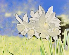 """""""White Daffodils and other images are available at my sit John Feiser on Fine Art America."""