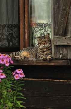 縁側と猫と花