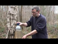 ▶ how to tap a birch tree - tried and tested method - YouTube 11min ... Early spring tap a tree on the southeast side. How to make a tap and plug