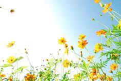 Photogenic-Yellow-Wildflower-With-Blue-Sky.jpg (900×603)