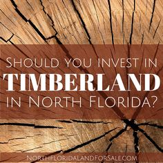 Should You Invest in Timberland in North Florida - North Florida Land for Sale Investing In Land, Mortgage Rates, Land For Sale, Timberland, Landing, Florida, Wealth, Articles