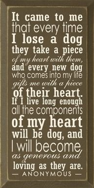 to all furry babies, past and present...