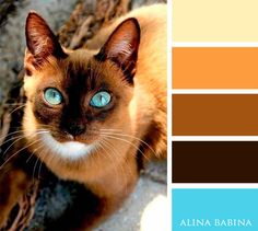 Home Decoration: Paint – brown and blue