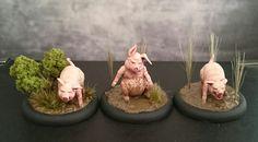 1st batch of piglets