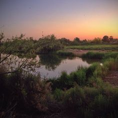 This great photo of the #RiparianPreserve in #GilbertAZ at sunset was taken by Instagram user @shunthesun.