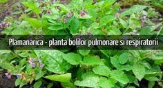 Roșii la borcan cu usturoi, pentru iarnă – LaTAIFAS Ayurveda, Parsley, Herbs, Medicine, Plants, Herb, Spice