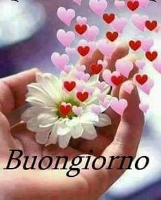 Saraseragmail. com.. Buongiorno. Flowers Gif, Hand Flowers, Good Morning Messages, Good Morning Quotes, Beautiful Day Quotes, Beautiful Pictures, Funny Jok, Romantic Gif, Good Morning Love
