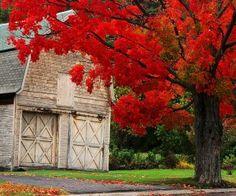 Red leaves falling ~ beautiful