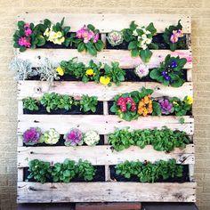 Today's project! #verticalgarden #palletplanter #outsideisin