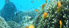 Chumbe Island snorkeling, Zanzibar
