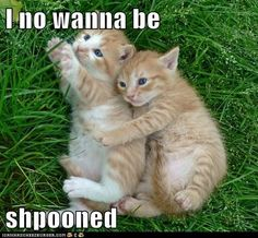 funny cat pictures - I no wanna be  shpooned