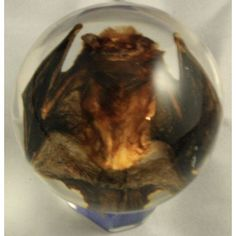 Real Bat Embedment in Medium Acrylic Sphere 2 Inches-Clear