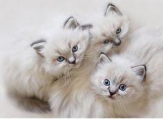 I really miss having a cat. Aren't these kittens adorable!!