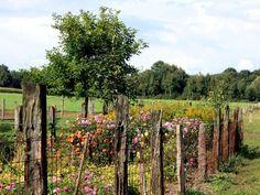 Mamiweb.de - Ein romantischer Bauerngarten