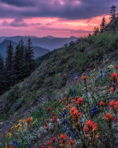 Oregon flowers Photo by @mattmacphersonphoto