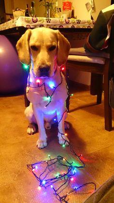 spanador Christmas time