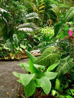 A variety of tropical plants thrive beneath the sun-filtered canopy of mature forest trees.
