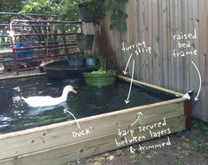 Small Fish Pond In Backyard . Small Fish Pond In Backyard . Small Backyard Ponds, Backyard Ducks, Backyard Water Feature, Backyard Farming, Chickens Backyard, Outdoor Ponds, Small Backyards, Above Ground Pond, Raised Pond